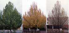 plant habit: summer, fall, winter