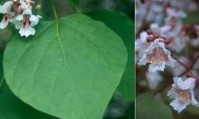 flower and leaf