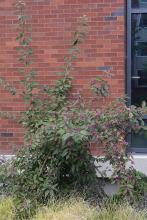 plant habit, late summer