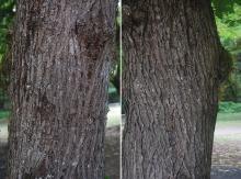 old trunk, bark