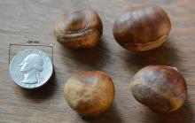"fruit, ""chestnuts"""