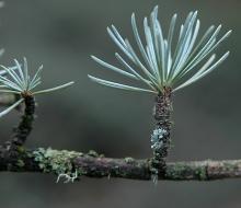 needle cluster