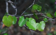 expanding leaves