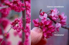 flowers and comparison