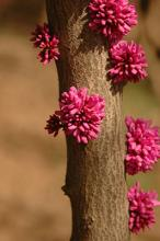 flowers on large branches