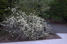 in a landscape, spring flowering