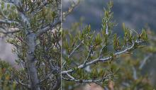 large and small branches