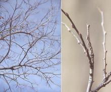 branches, winter