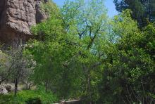 in habitat, Utah