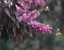 flowers and previous season's fruit