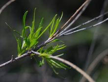 expanding leaves, spring