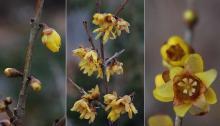 flowers, winter