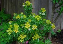 plant habit, flowering, deep shade