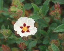 flower and leaves