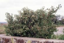 plant habit, in habitat, summer
