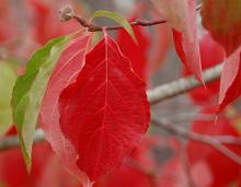 leaves and flower bud, fall
