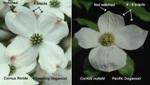 flower, comparison