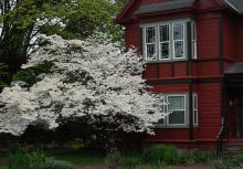 plant habit, white flowering