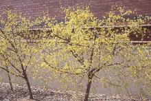 plant habit, shrub, flowering