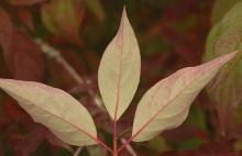 underside leaves, fall