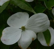flower (bracts)
