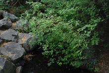 in habitat, fruiting