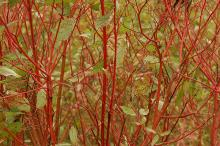 stems and leaves, fall