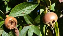 fruit and leaf