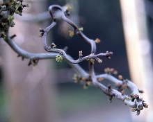 branch, spring