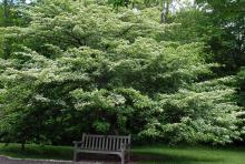 plant habit, late spring flowering
