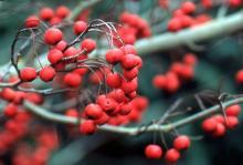 fruit in winter