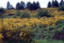 plant habit, flowering, naturalized site