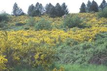 plant habit, flowering, naturalized site