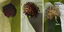 true flower development