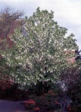plant habit, spring flowering