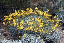 plant habit, flowering in a landscape