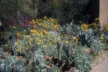 plant habit, in habitat flowering