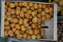 fruit in a market