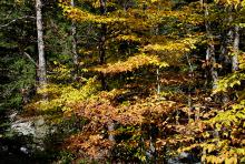 young trees in habitat, fall