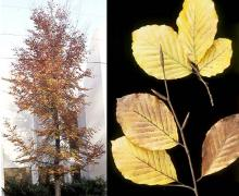plant habit and leaves,fall