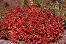 plant habit, fall (again)