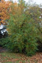 plant habit, late fall