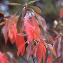 leaves, late fall