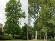 plant habit, one and several trees