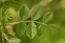 expanding leaf