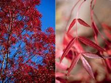 foliage and leaf, fall