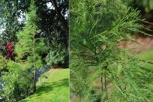 small tree and foliage