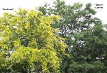 foliage, comparison, late May