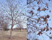 plant habit and fruit, winter