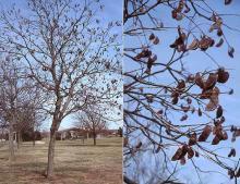 plant habit, winter fruit